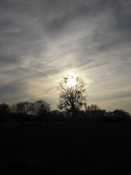 Baum, Niederrhein, Licht, Stimmung, Natur, Sonne