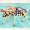Aquarellmalerei, Tiere, Wespe, Aquarell