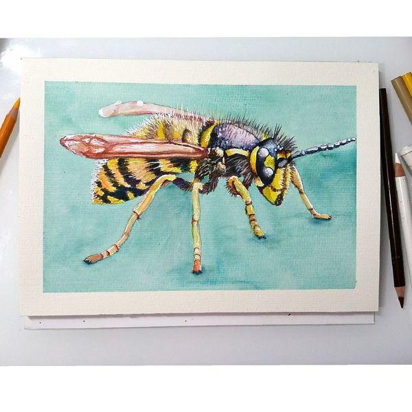 Wespe, Illustration, Insekten, Realismus, Aquarellmalerei, Tiere