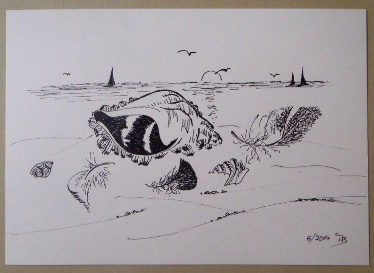 Feder, Strand, Muschel, Zeichnung, Segelschiff, Meer