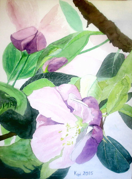 Knospe, Aquarellmalerei, Apfel, Frühling, Aquarell, Blumen