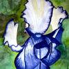Aquarellmalerei, Blumen, Iris, Blüte
