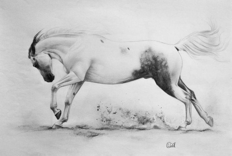 Pferde, Galopp, Reiten, Tiere, Schwarzweiß, Schecke