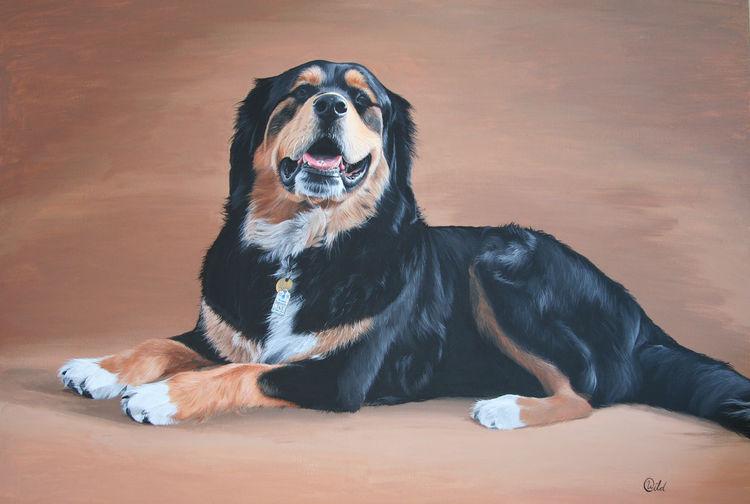 Braun, Portrait, Hündin, Hund, Platz, Schwarz weiß