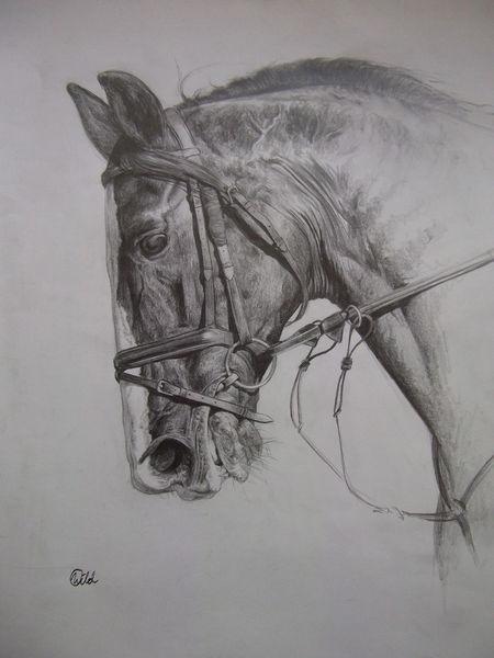 Portrait, Reiter, Schwarzweiß, Tiere, Springreiten, Springpferd