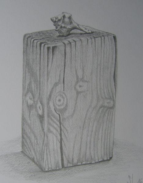 Muschel, Holz, Zeichnung