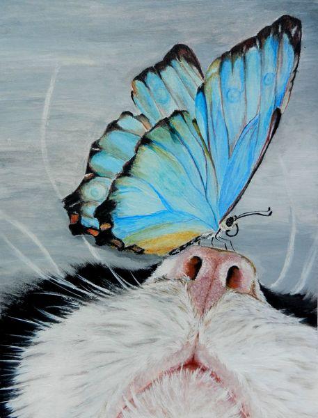 Tiere, Katze, Nahaufnahme, Schmetterling, Bläuling, Mischtechnik