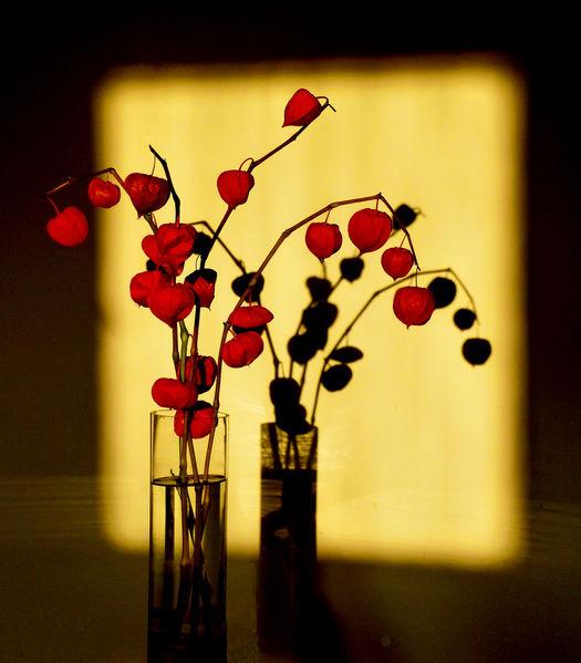bild schatten blumen fotografie malerei von georg eichinger bei kunstnet. Black Bedroom Furniture Sets. Home Design Ideas