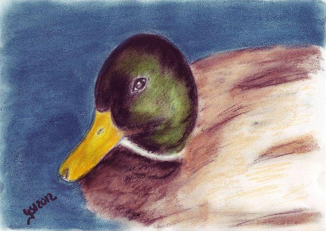 Tierzeichnung, Vogel, Ente, Szene, In bewegung, Zeichnungen