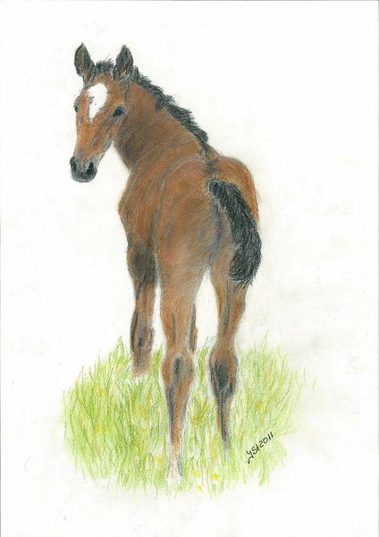 Pferdezeichnung, Szene, Tierzeichnung, Portrait, Pferdeportrait, Fohlen