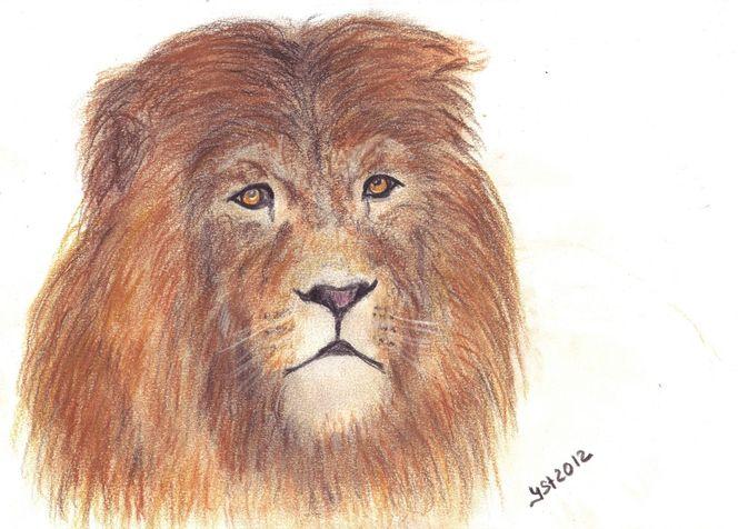 Tierzeichnung, Löwe, Augen, Tiere, Portrait, Zeichnungen
