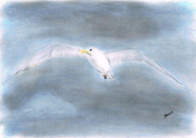 Möwe, Tierportrait, Vogel, Zeichnungen, Tiere
