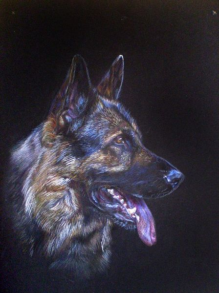 Hund, German shepherd, Animals,