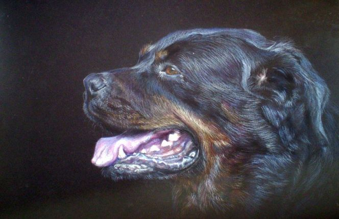 Dogб rottweiler,