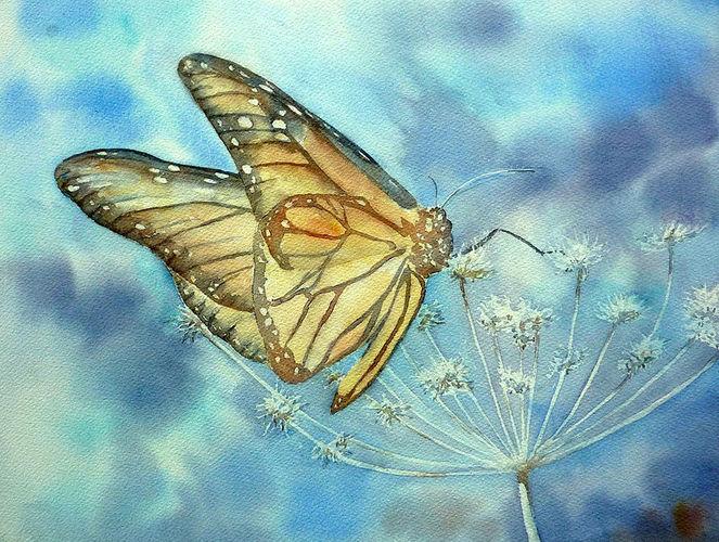 Dolde, Monarchfalter, Schmetterling, Aquarell, Stillleben,