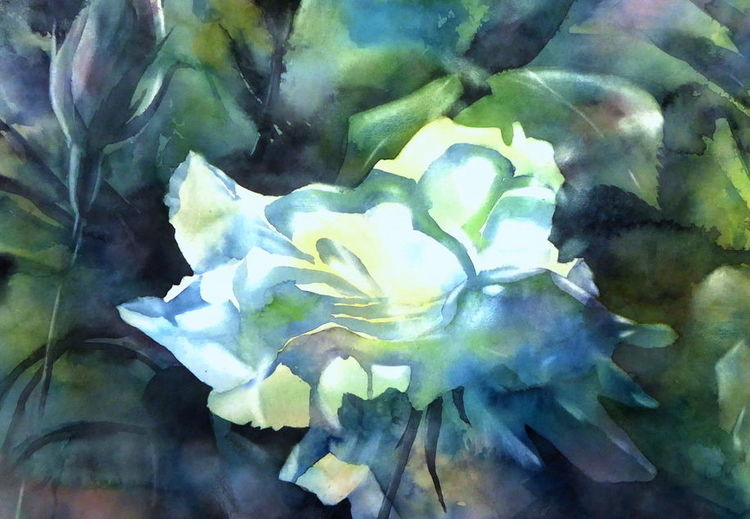 Rose, Blumen, New dawn, Aquarellmalerei, Aquarell