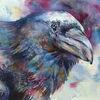 Aquarellmalerei, Vogel, Rabe, Aquarell