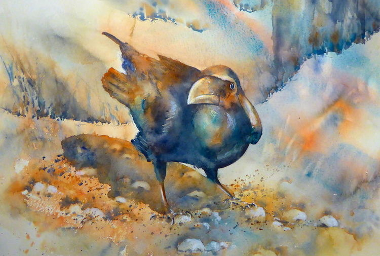 Rabe, Vogel, Aquarellmalerei, Under observation, Aquarell