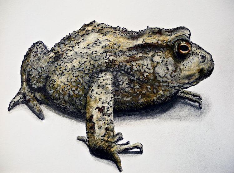Frosch, Tuschmalerei, Erdkröte, Grafit, Kröte, Aquarellmalerei