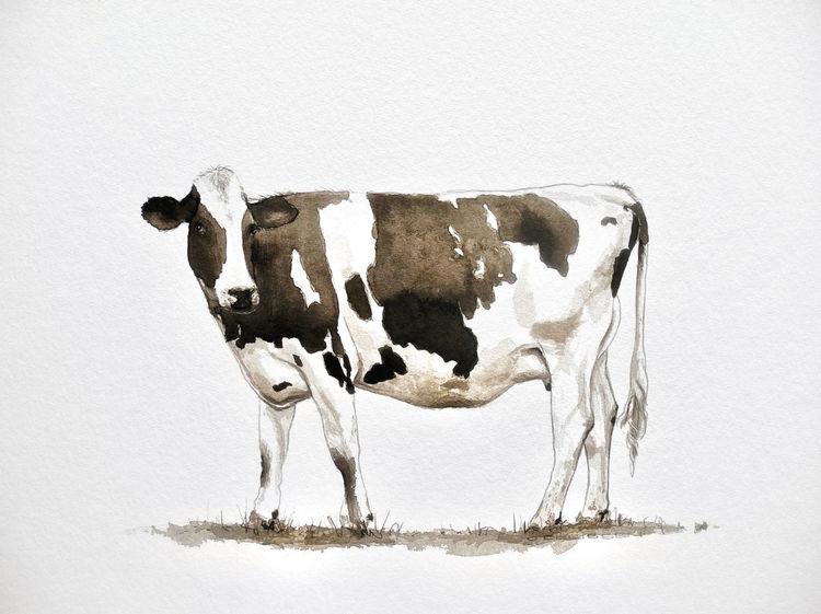 Kuh, Sepia, Tuschmalerei, Zeichnungen