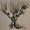 Weide, Baum, Aquarell,