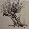 Baum, Kopfweide, Weiden, Aquarell