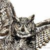 Eule, Zeichnung, Greifvogel, Tuschmalerei