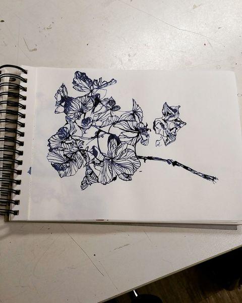 Vertrocknen, T tusche, Pflanzen, Vanitas, Zeichnungen
