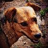 Hund, Natur, Tiere, Digitale kunst