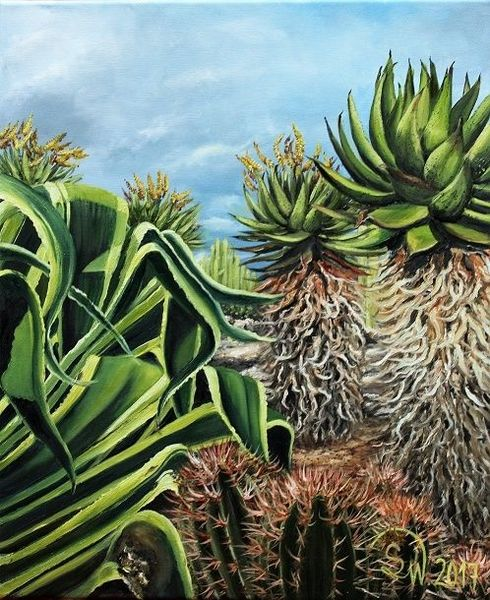 Pflanzen, Botanik, Agaven, Grün, Kaktus, Mediterran