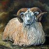 Schafwolle, Bauernhof, Schaf, Horn