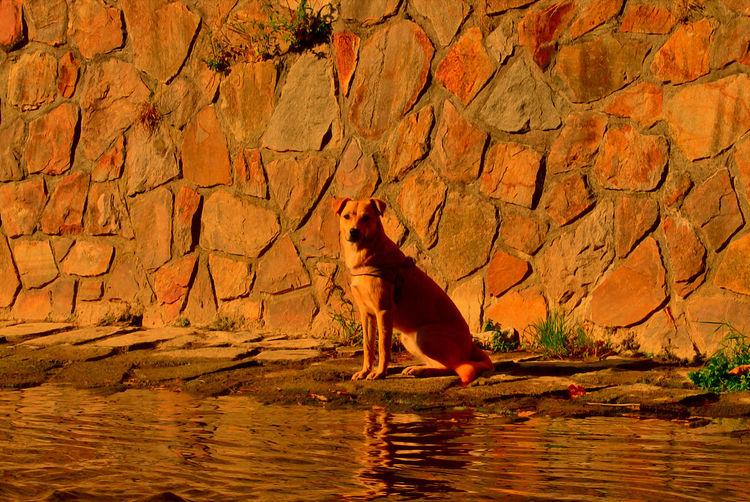 Tiere, Landschaft, Ausdruck, Fotografie, Wasser, Abendlicht
