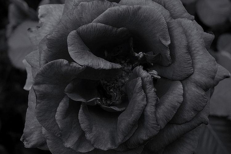 Konzept, Fotografie, Pflanzen, Ausdruck
