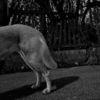 Tiere, Horror, Fotografie, Hund