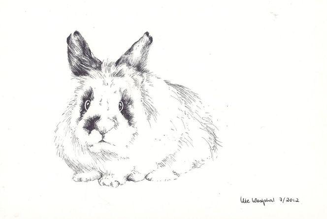 Kaninchen tier haustier, Malerei, Tiere