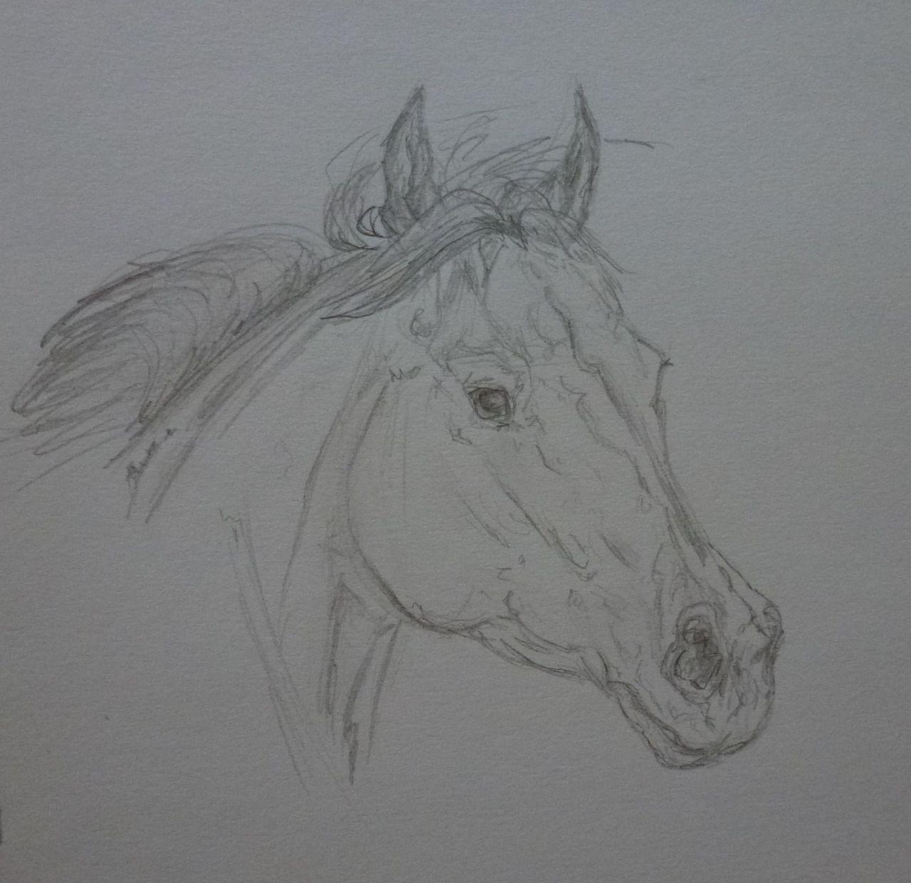 Pferdekopf Skizze, Araber-mix