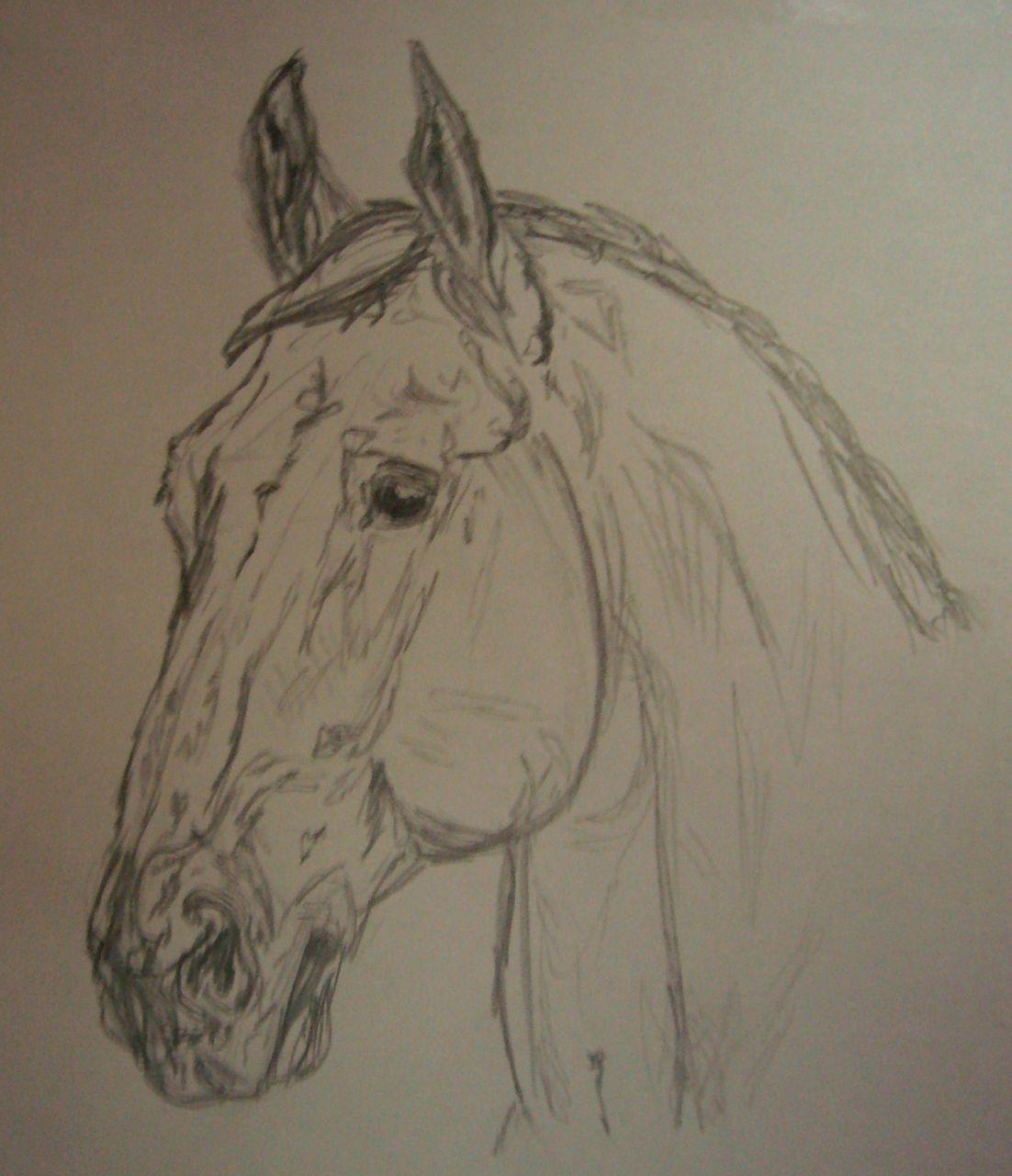 bild pferd zeichnungen tiere pferdekopf von ala 12 bei. Black Bedroom Furniture Sets. Home Design Ideas
