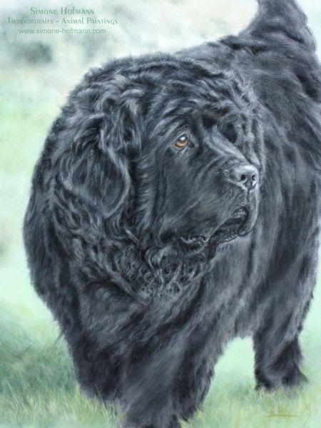 Pastellmalerei, Neufundländer, Hundeportrait, Tierportrait, Malerei