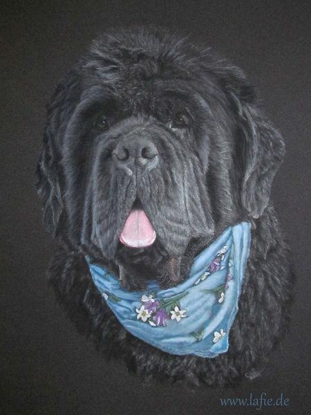Hund, Tierportrait, Portrait, Neufundländer, Malerei