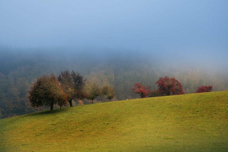 Baum, Fotografie, Herbst