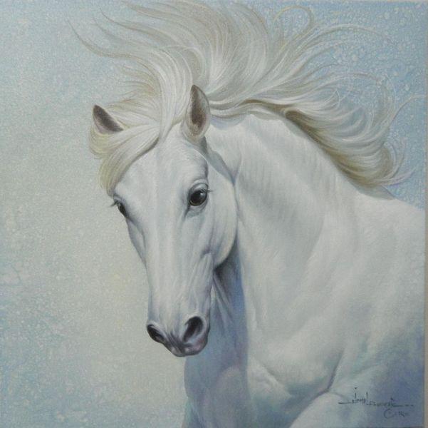 Wildpferd, Kollektion, White horse, Tiere, Pferde, Portrait