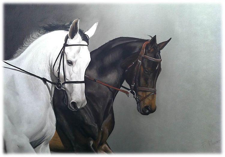 Pferde, Pferdeportrait, Zeichnungen, Duo