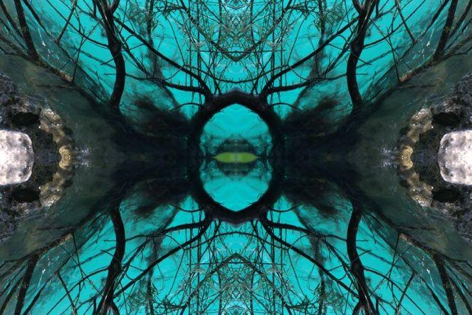 Augen, Ruhe, Mystik, Erkenntnis, Spiegelung, Tiere