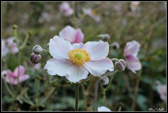 Pflanzen, Sommer, Garten, Fotografie