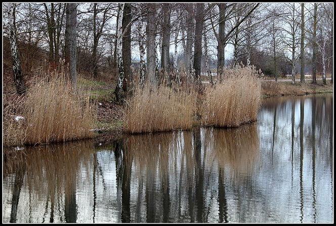 Spiegelung, See, Baum, Landschaft, Fotografie