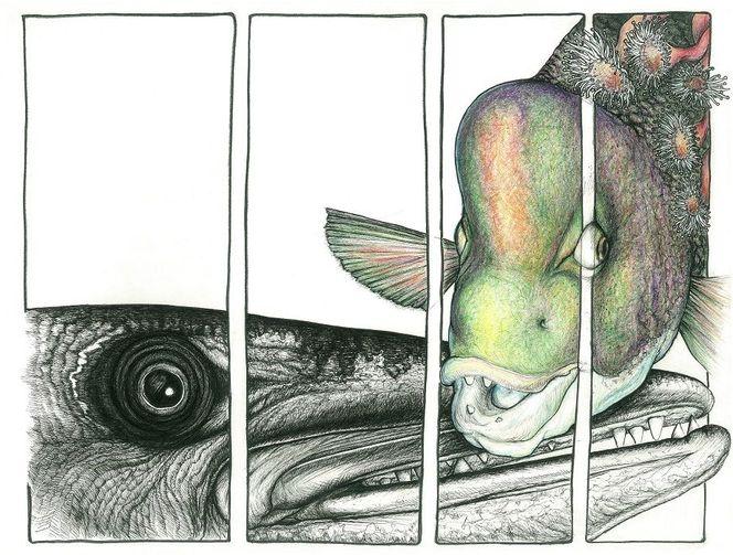 Papageienfisch, Barrakuda, Fisch, Zeichnungen