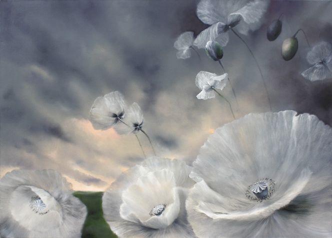 Sommer, Weiß, Wind, Flüchtig, Blumen, Wiese