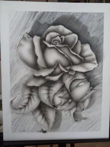Rose, Dorn, Freude, Schwarz weiß, Liebe, Blumen