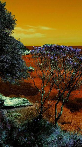 Landschaft, Sehnsucht, Baum, Meer, Freiheit, Digitale kunst