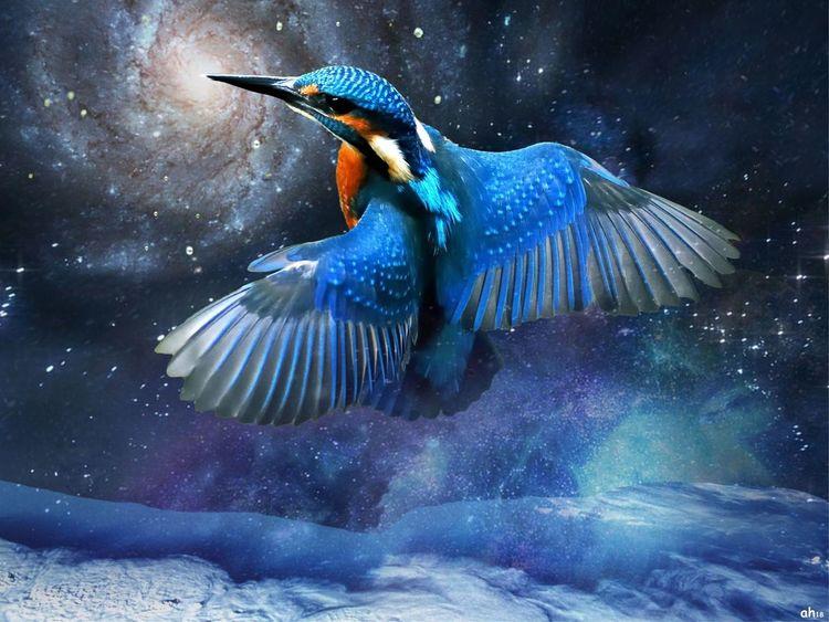 Eis, Nektar, Eisvogel, Galaxie, Kolibri, Illustrationen